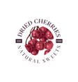 dried cherries emblem vector image