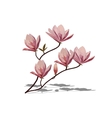 Blossom brunch of pink magnolia vector image vector image