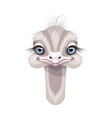 funny little ostrich portrait on white vector image