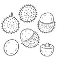 set of rambutan vector image vector image