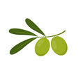 branch with green olives isolated on white vector image vector image