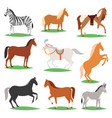 horse animal of horse-breeding or vector image