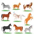 horse animal of horse-breeding vector image