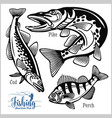 pike perch and cod fishing on usa isolated vector image vector image