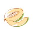 ripe melon isolated icon vector image vector image