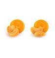 set of realistic mandarin or tangerine slices vector image