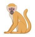 vervet monkey animal sitting on a white vector image