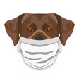 dog labrador with respirator vector image vector image