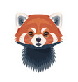 funny red panda portrait on white vector image