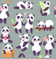 panda characters in different positions seamless vector image