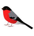 eurasian bullfinch cartoon bird vector image vector image