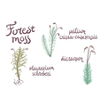 Forest moss set vector image vector image