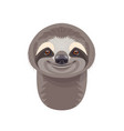 funny sloth portrait on white vector image