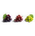 grapes realistic composition vector image vector image