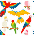 parrots macaw red-blue isolated on white vector image