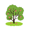 Peach Tree Icon vector image vector image