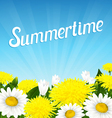 Summer beautiful flowers vector image vector image