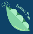 Sweet Pea vector image vector image