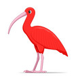 red ibis bird on a white background vector image vector image