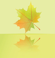 autumn wet maple leaf falls to the puddle vector image