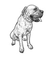 Drawing of mastiff dog on sitting pose vector image