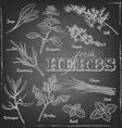 herbs blackboard vector image vector image