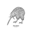 kiwi bird hand draw sketch vector image vector image