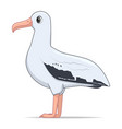 wandering albatross bird on a white background vector image vector image