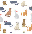 cat seamless pattern cute kitten in vector image vector image