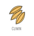 cumin line cooking isolated vector image