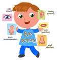 five senses boy vector image vector image