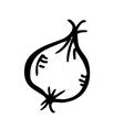 garlic doodle vector image
