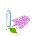 Essential oil and Beautiful Purple Lavender Flower vector image vector image