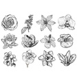 Floral Sketch Set vector image vector image