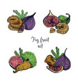 set of different fig fruit fresh and dried fruits vector image vector image