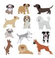 dog cute cartoon puppy home vector image