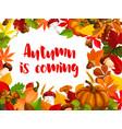 autumn nature frame fall season poster template vector image vector image