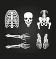 full human skeleton design vector image vector image