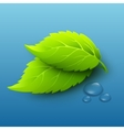 green leaves and dew drops vector image vector image