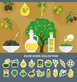 olives icons collection vector image vector image