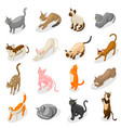 purebred cats isometric icons vector image