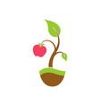 apple tree logo vector image