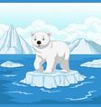 cartoon polar bear isolated on ice floe vector image vector image