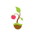 the apple tree logo vector image
