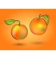 Two mandarin on an orange background vector image