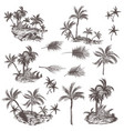 big collection hand drawn palm trees for design vector image vector image