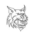 bobcat american football mono line vector image vector image
