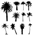 collection palm trees silhouettes vector image