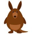 fat kangaroo on white background vector image