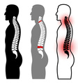 human spine silhouettes vector image vector image